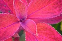 Red Flower 2