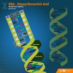 Deoxyribonucleic-Acid-from-NHGRI