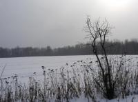 Winter Field #1