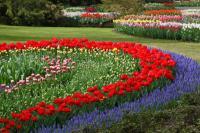 Flower Garden 1