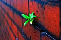 Plant on Brick Wall