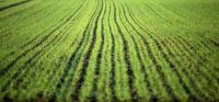 Mowed-Lawn-Grass-Texture