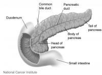 Pancreas, Duodenum, and Small Intestine